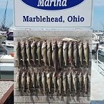 Lake Erie Walleye Fishing Charter